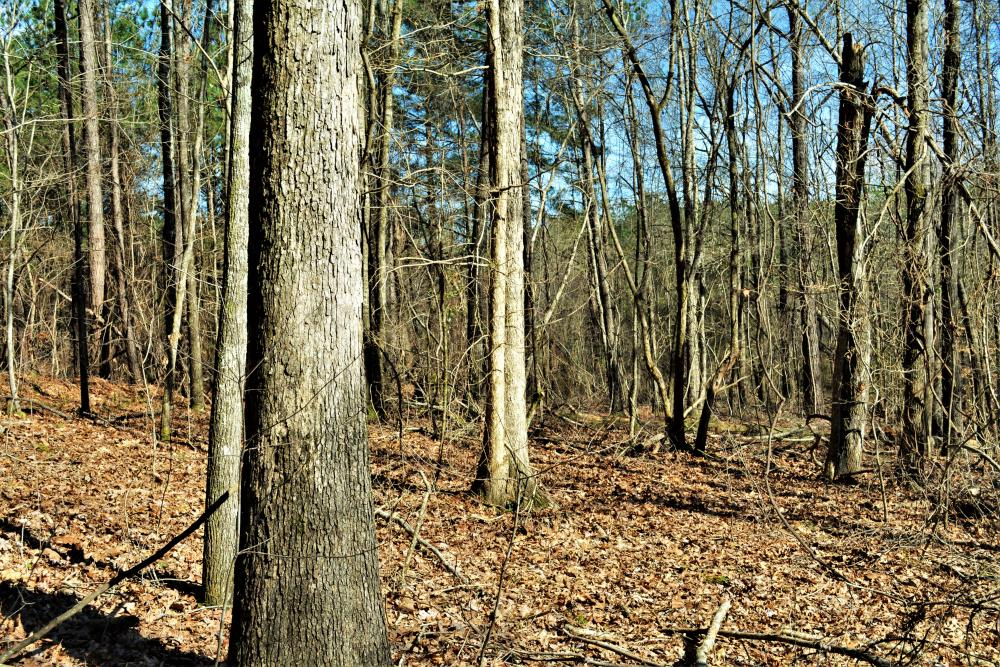 Coaling Timber Investment and Hunting Property in Tuscaloosa County, AL