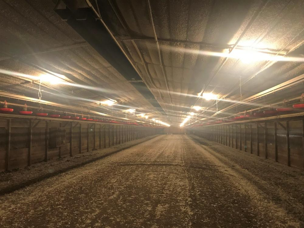 Reevesville Chicken Farm in Orangeburg County, SC