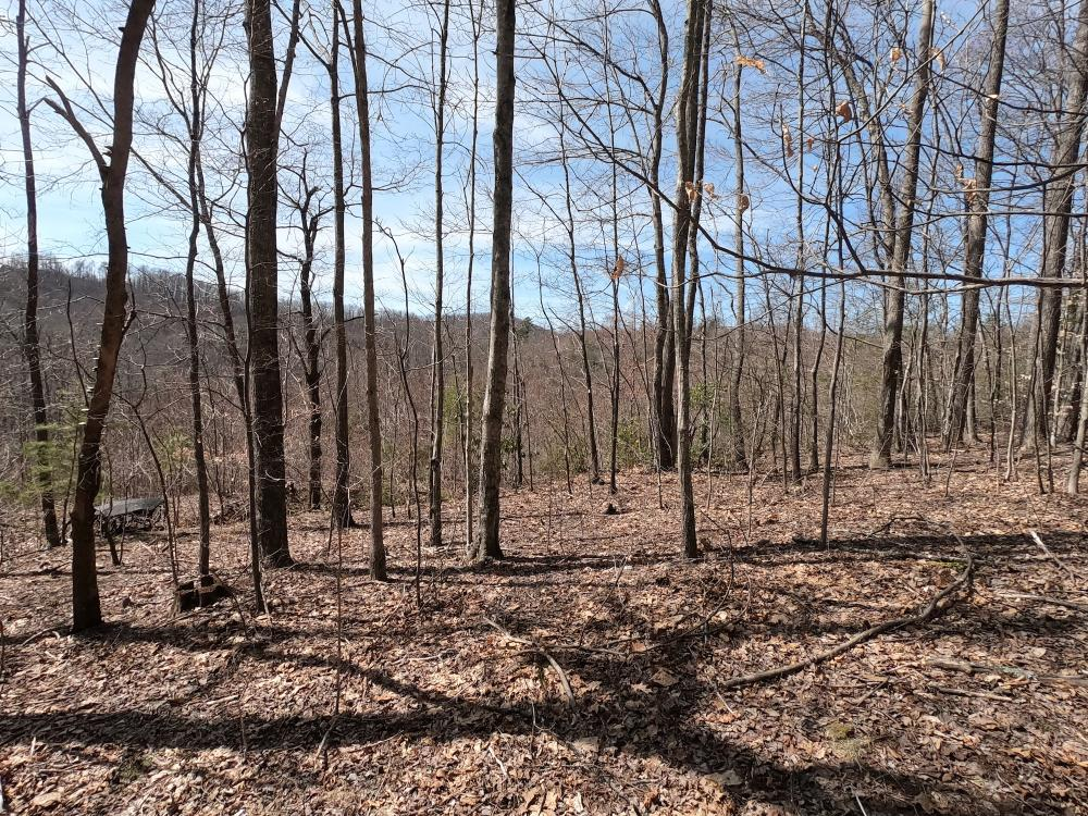 Unrestricted Woodland Acreage near Edneyville in Henderson County, NC