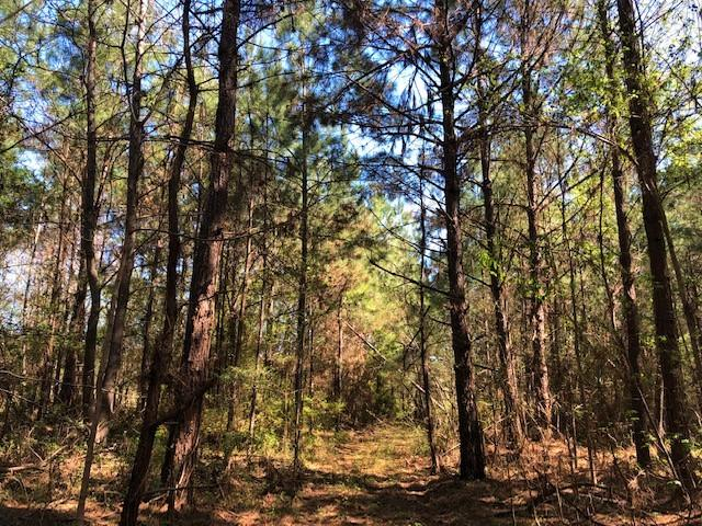 Nub Road 40 acres in Amite County, MS