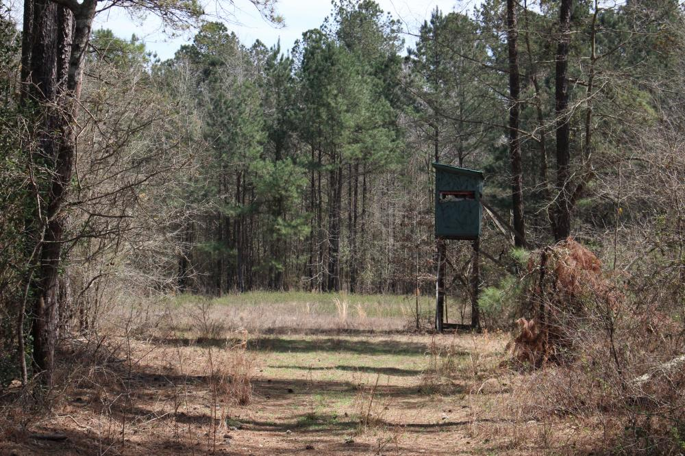 Brier Creek Hunting Tract in Jefferson County, GA