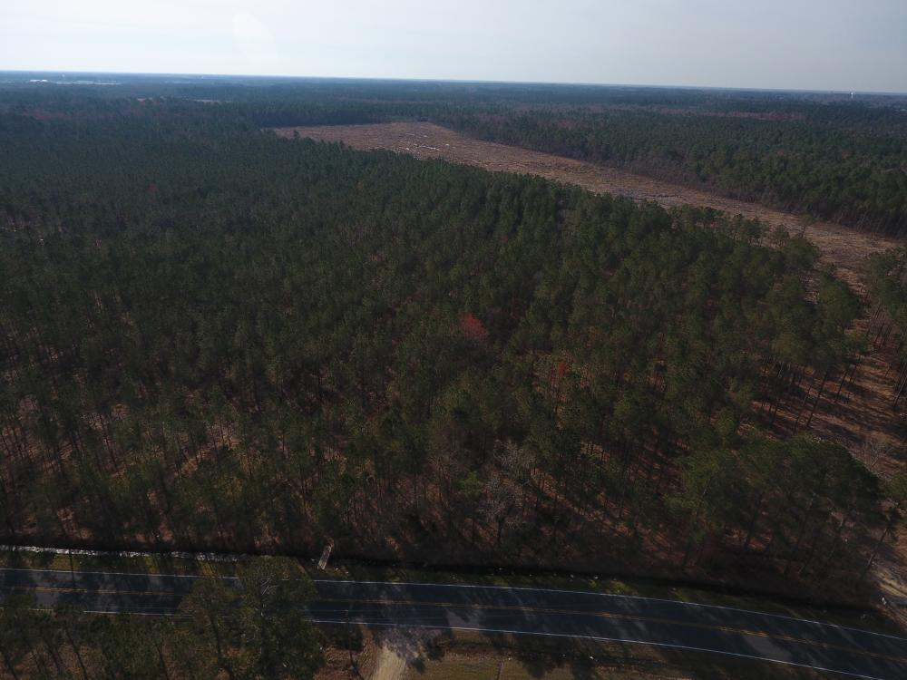 Dawson's Station Timber Tract in Lenoir County, NC