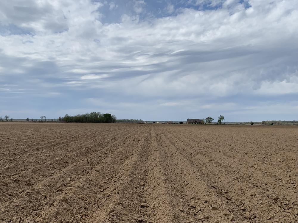 52 Acres of Irrigated, Leveled Farm Land with Excellent Residential Development Possibilities in Richland Parish, LA