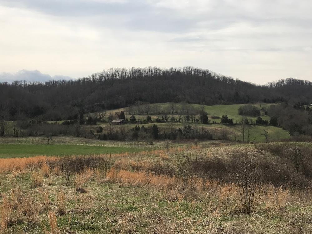 Graysburg Hills Large Acreage Estate in Greene County, TN