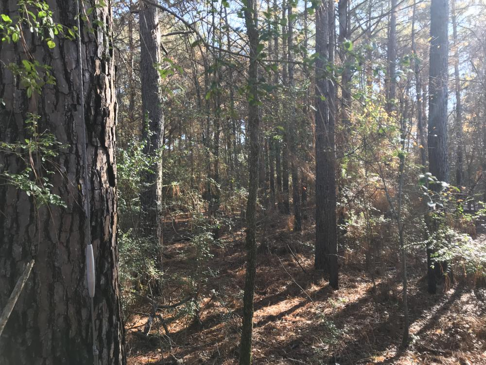 Great Hunting/ Timber Tract in West Carroll Parish I in West Carroll Parish, LA