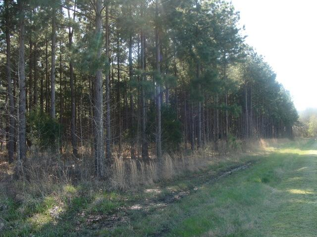 Timber and Hunting Tract in Prairie County, AR