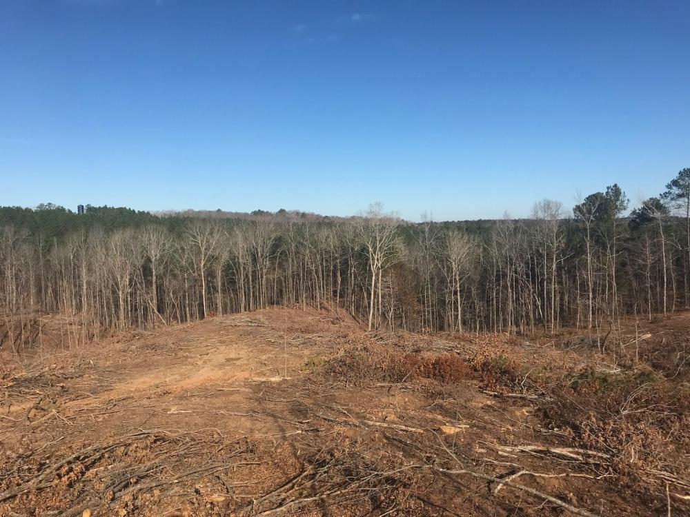 Jackson Road Hunting Tract in Lamar County, AL