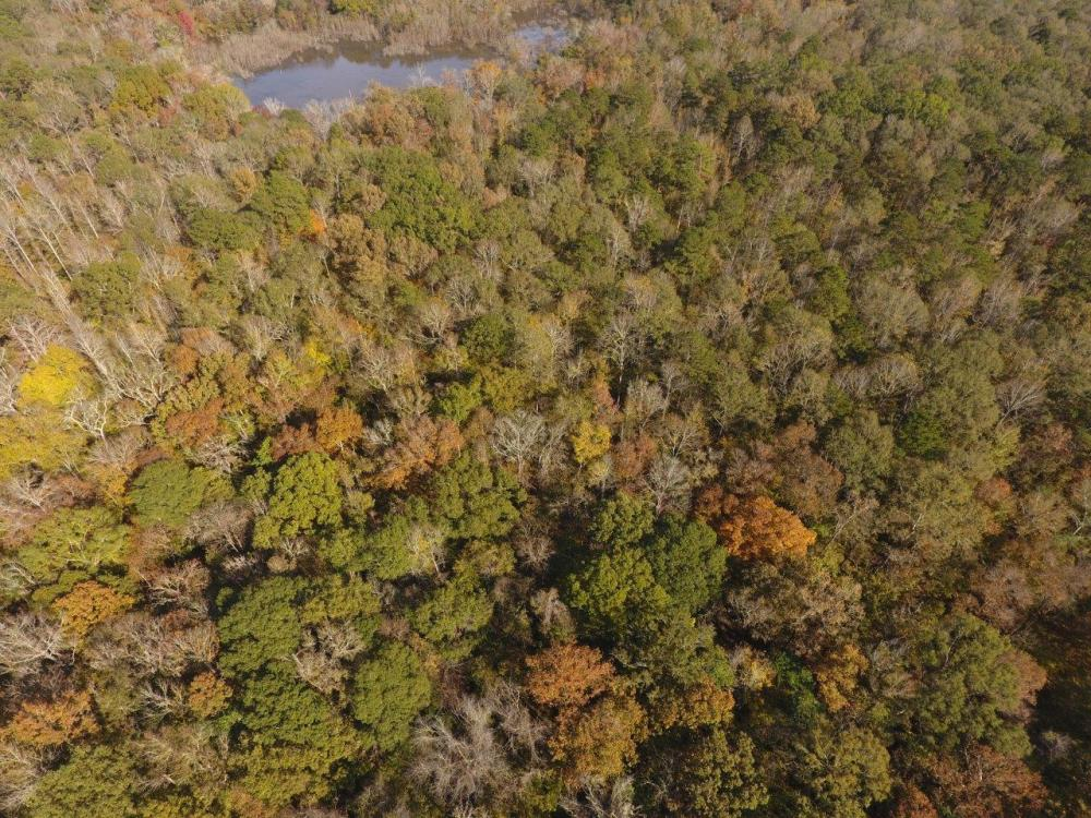 Catoma Creek Timber, Hunting, and Recreation in Montgomery County, AL