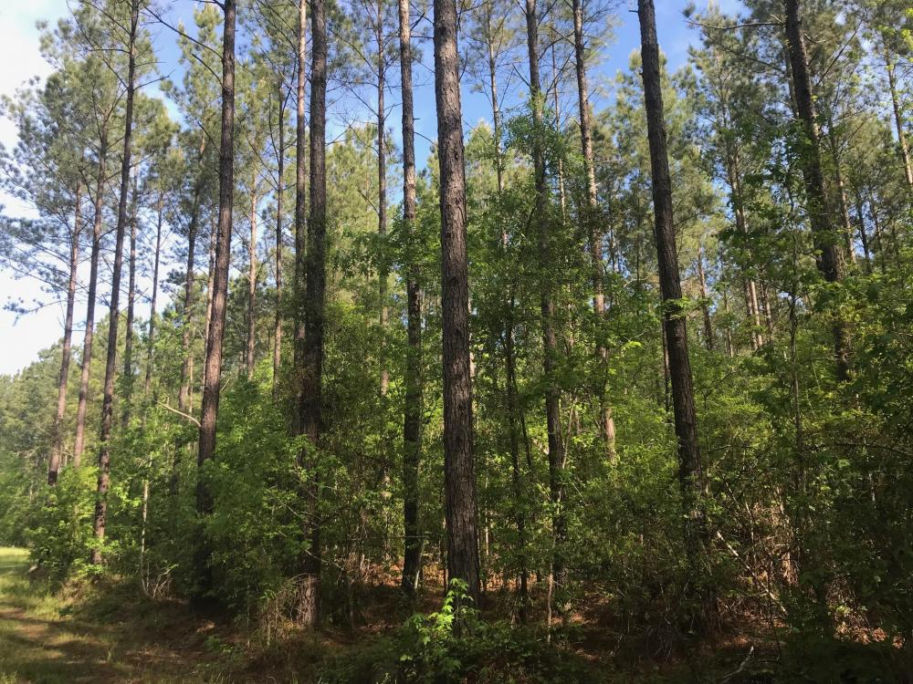 Savannah Creek Rec Tract A in Berkeley County, SC