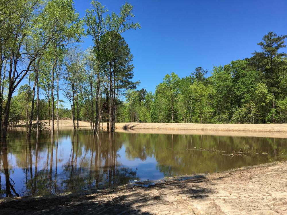 Springvale Recreational Tract with Homesite and Pond in Kershaw County, SC