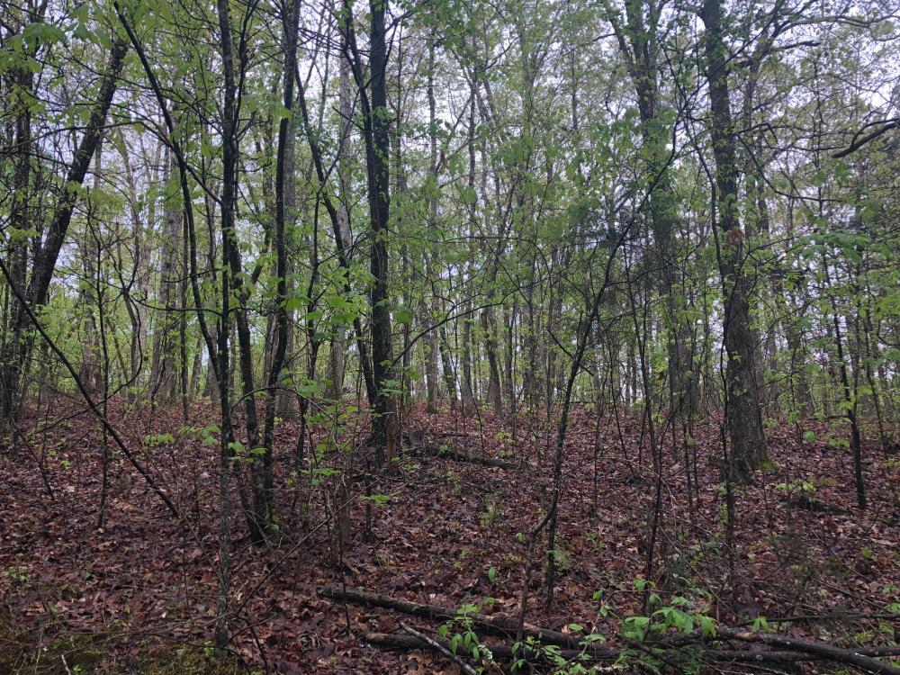 Lick Creek Timber and Hunting Property in Calhoun County, MS