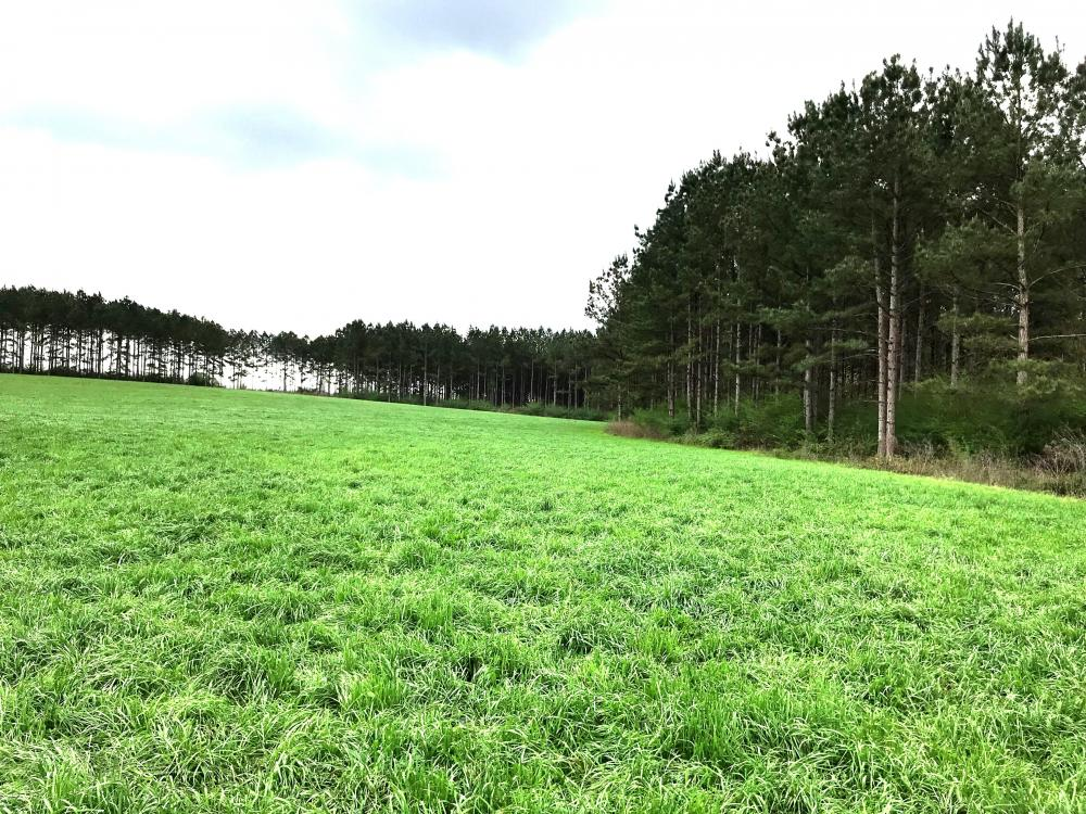 Large Cattle Farm with Timber in Pearl River County, MS