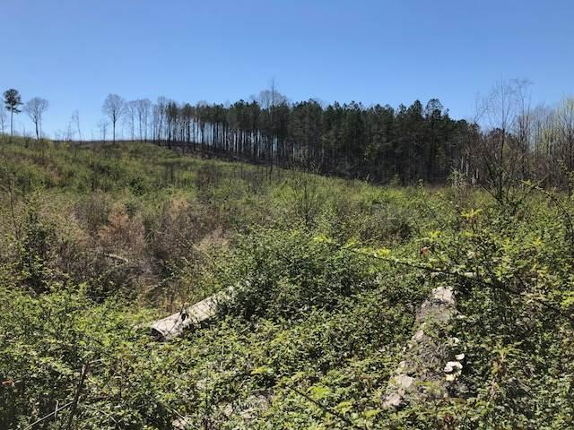 Deer Hunting / Clean Slate Cut-over in Winston County, MS