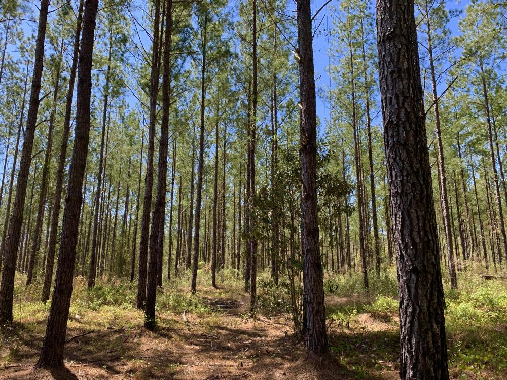 Dyas Road Recreational and Timber Investment Tract in Baldwin County, AL