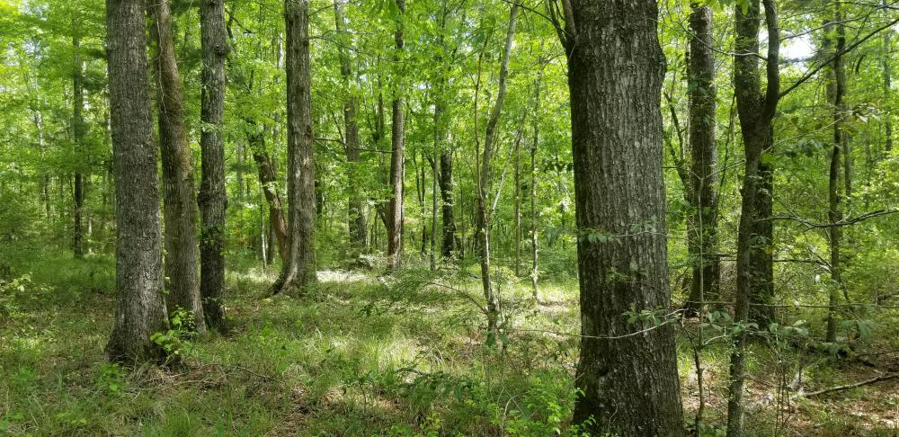 Stills Cross Roads Hunting, Timber, Potential Home Site  in Pike County, AL