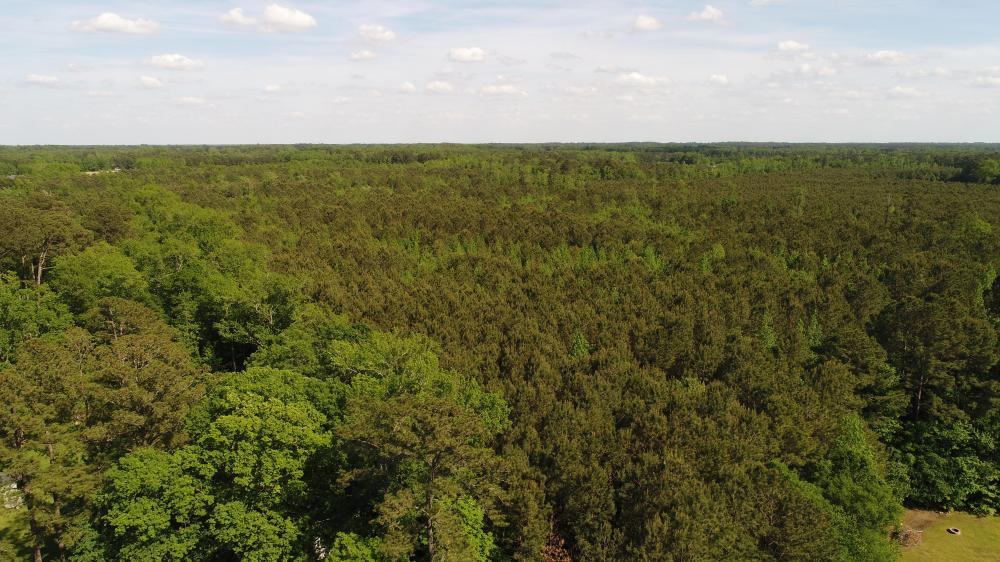 Princeton-Kenly Road Timber & Hunting Land  in Johnston County, NC
