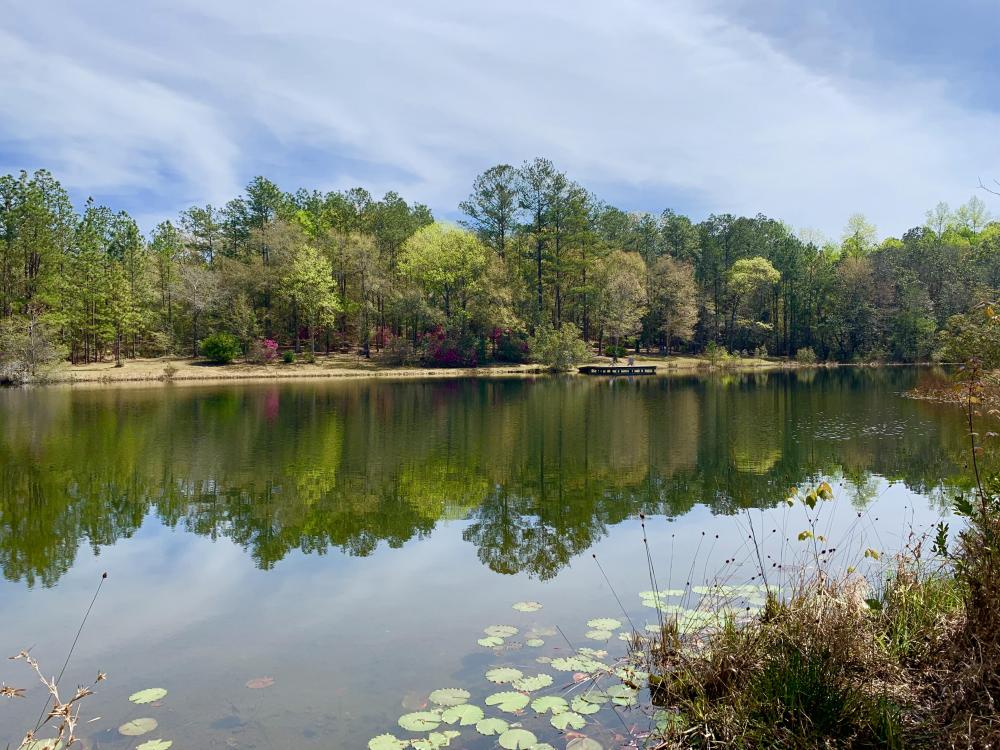 Wolfden Lake Lodge and Timber Investment  in Mobile County, AL