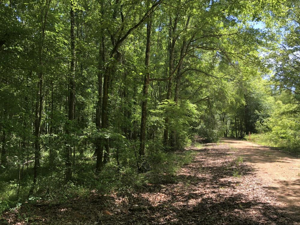 Beaver Creek Big Timber in Amite County, MS