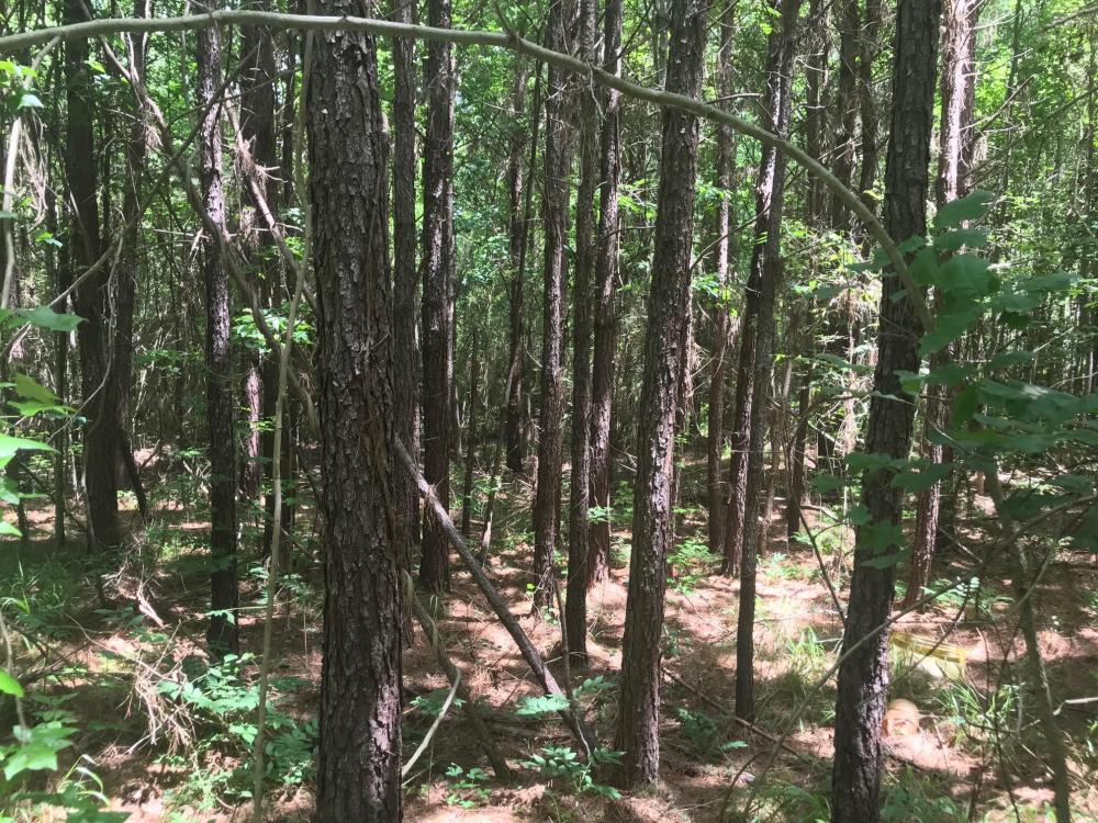 Coontail Road, Investment, Hunting, Homesite in Monroe County, MS