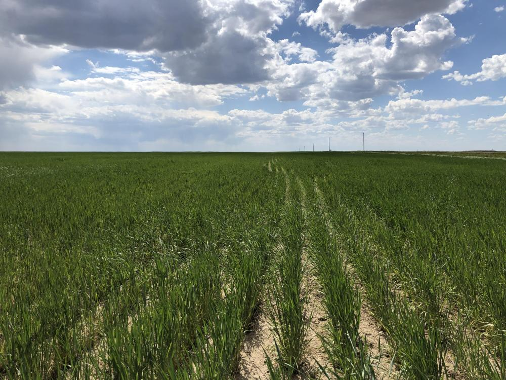 Kiowa County Dry Land For Sale in Kiowa County, CO