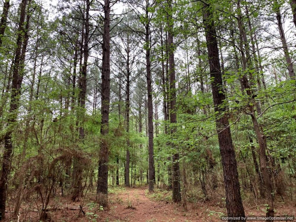 Loring Road Timber and Hunting Investment  in Madison County, MS