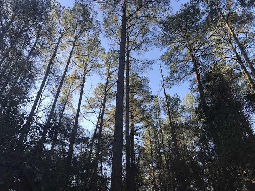Mature TImber Investment and Hunting Land in Leake County, MS