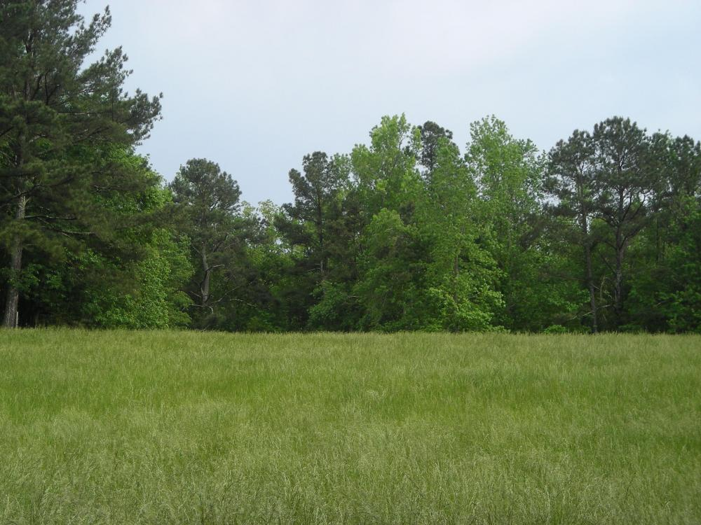 17+/- AC Potential Farm with Pasture in Haralson County, GA