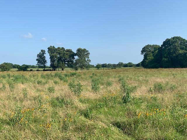 22.7 +/-  ac Pasture, Building Site, Eustace ISD in Henderson County, TX