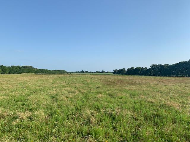 15.2 +/- ac Pasture, Scattered Trees, Building Site  in Henderson County, TX