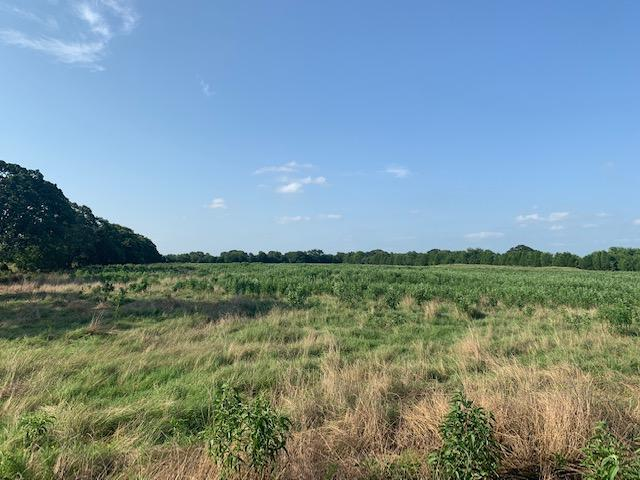 23.8 ac Pasture, Nice Pond, Great Building Site in Henderson County, TX