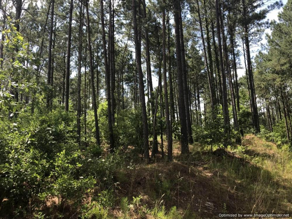 41 Acres Ball Rd. Hunting & Timber Tract in Winston County, MS