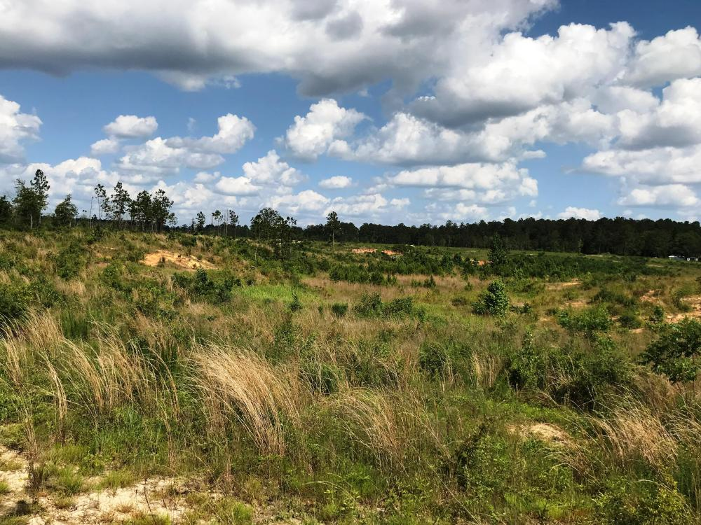 Sandhill Timber and Farm Land in Greene County, MS