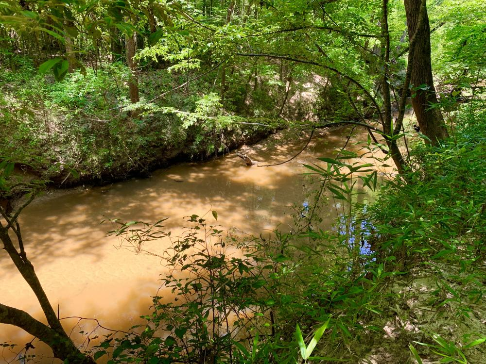 Bogue Chitto Creek and Recreational Tract in Choctaw County, AL