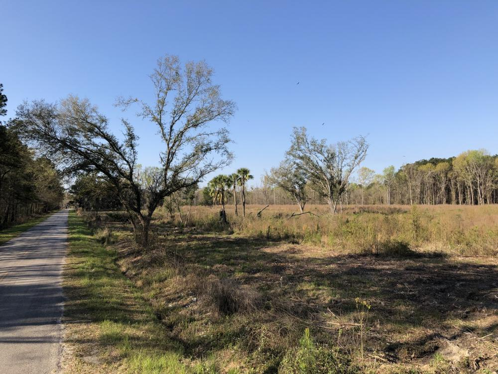 Dale 10 Ac Open Land Rural Residential in Beaufort County, SC
