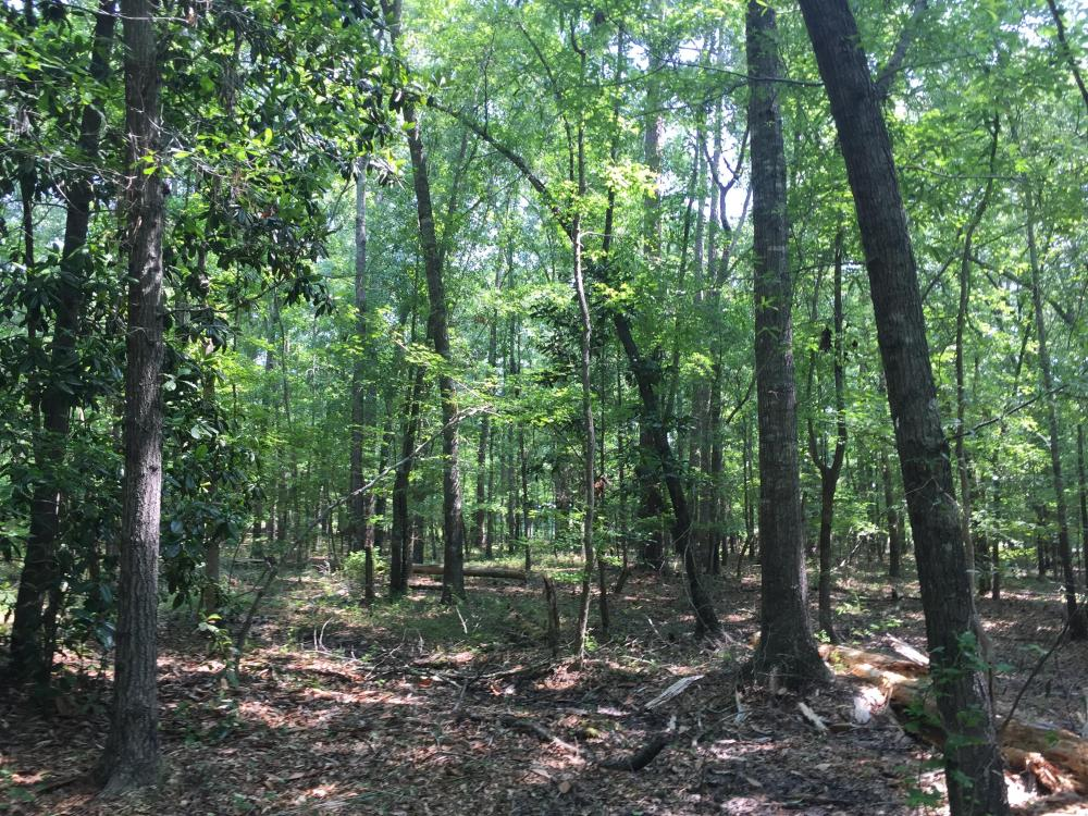 White Oak Investment Tract B in Clarendon County, SC