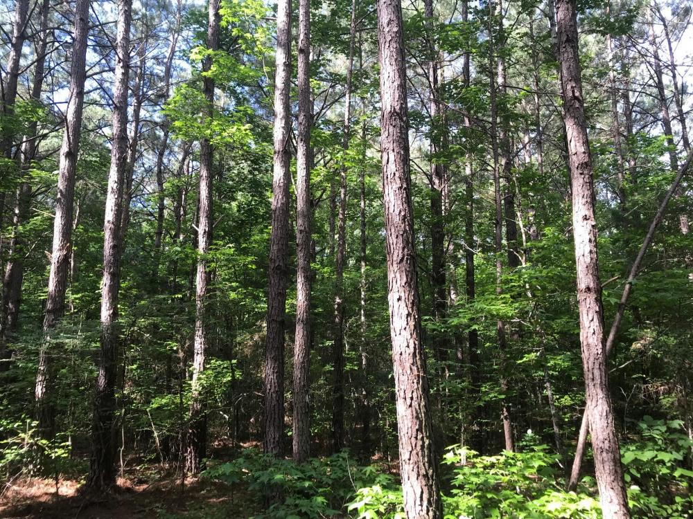 Timber, Investment, Hunting Opportunity in Chickasaw County, MS