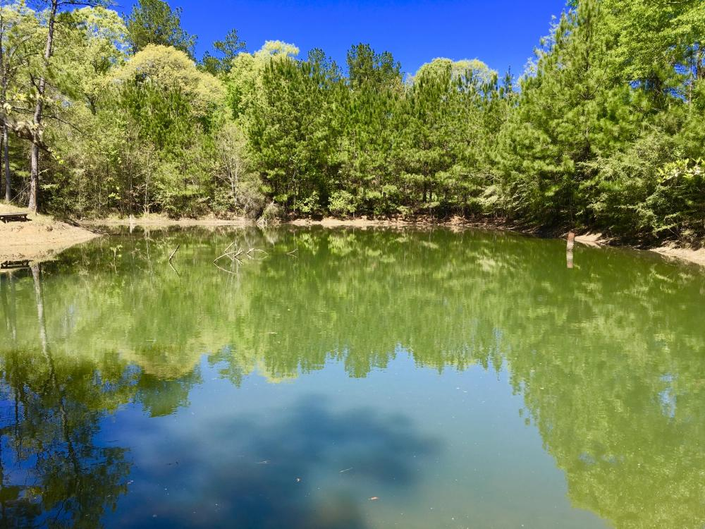 Okwakee Creek Camp and Pond Tract in Washington County, AL
