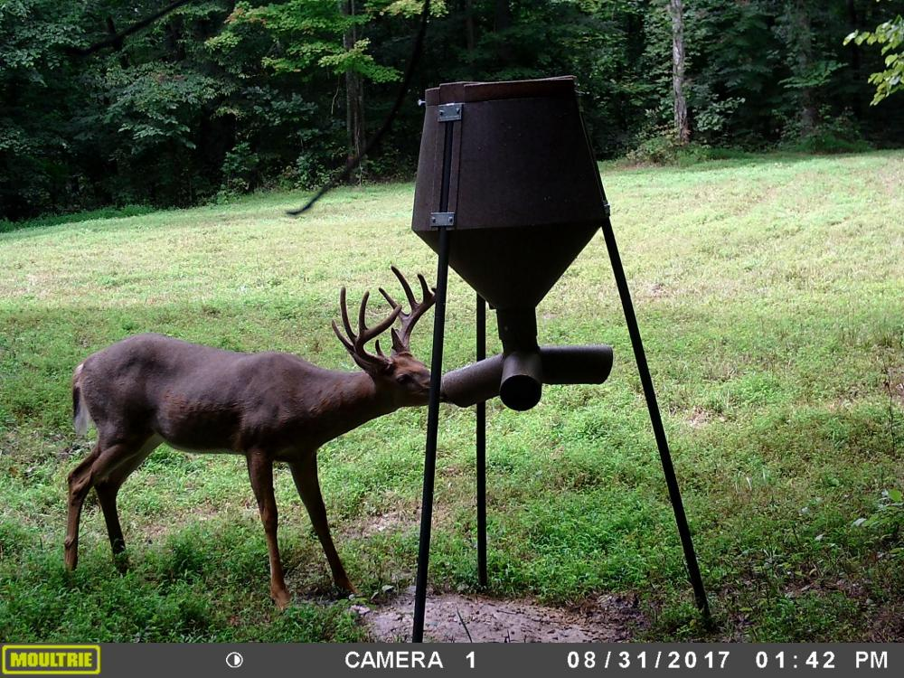 296 Acres - Timber, Foodplots, Hunting and Recreation  in Adair County, KY