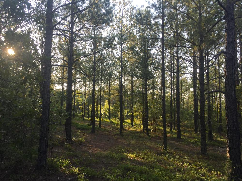 Jones Road 7.9 Acre Homesite and Timber in Kershaw County, SC