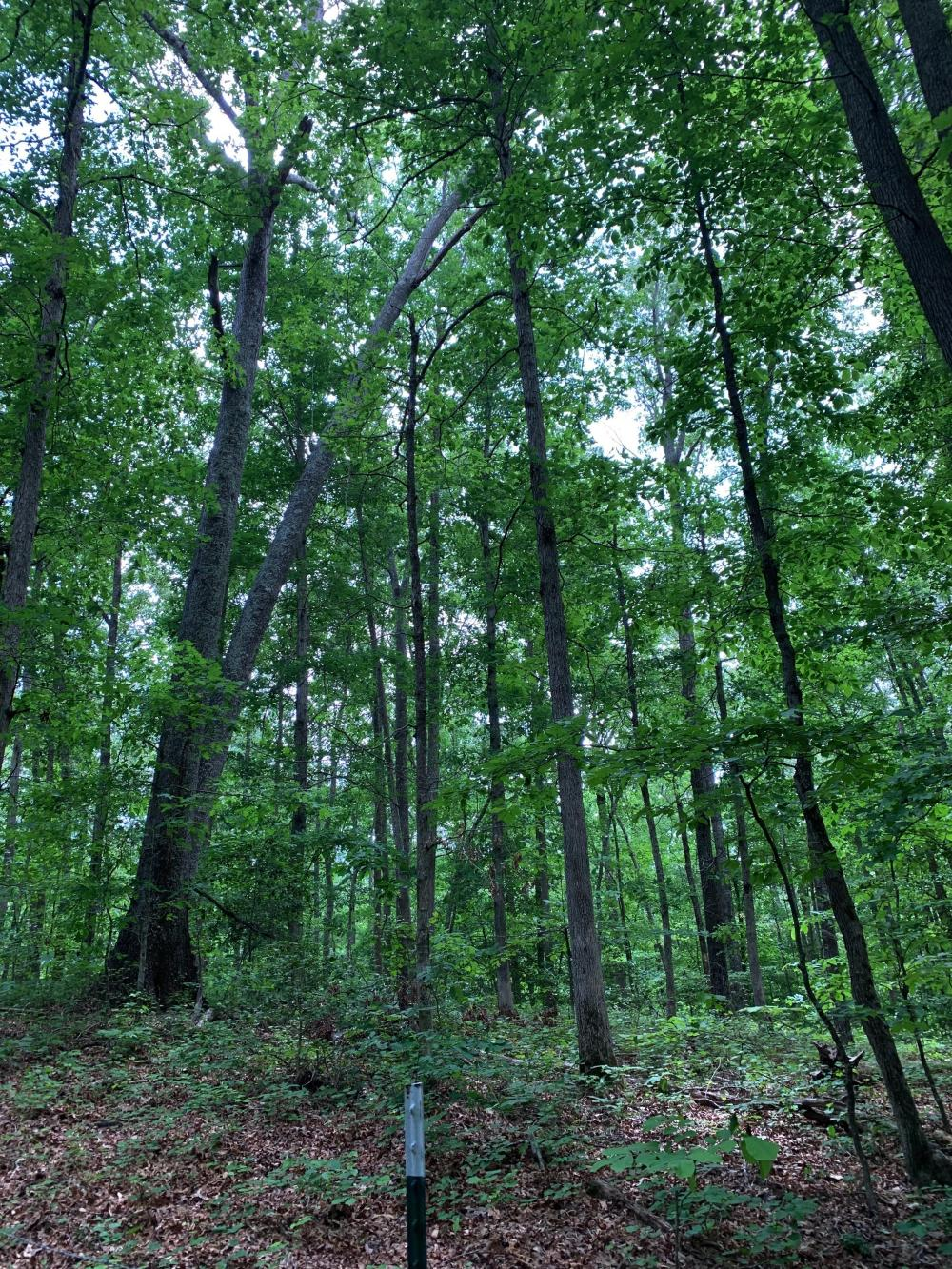 Lexington Timber Investment/Hunting  in Henderson County, TN
