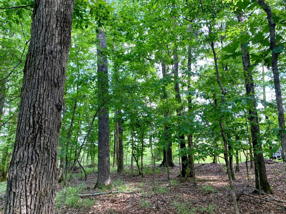 Hybart Tallatchee Creek Hunting & Timber Investment in Monroe County, AL