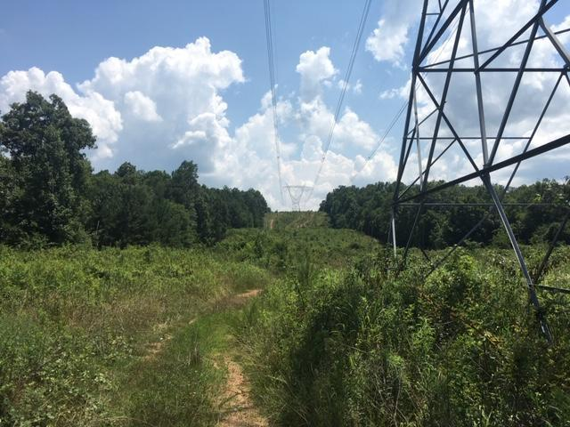 Hanceville Timber & Hunting Tract in Cullman County, AL