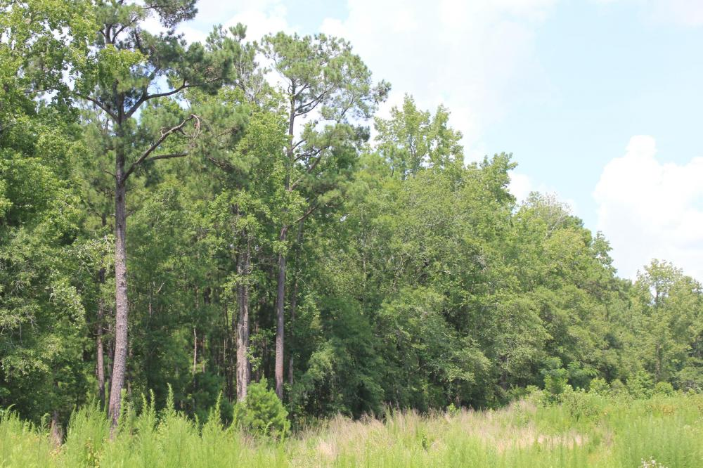 Jamestown Investment and Hunting Land in Berkeley County, SC