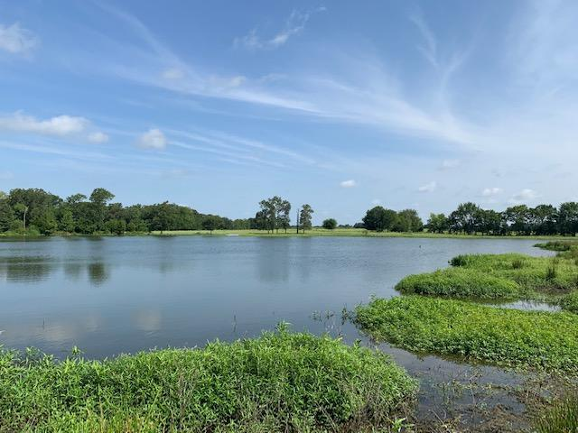 75 Acres with Large Private Lake, Near Lake Fork, Pasture, Timber in Rains County, TX