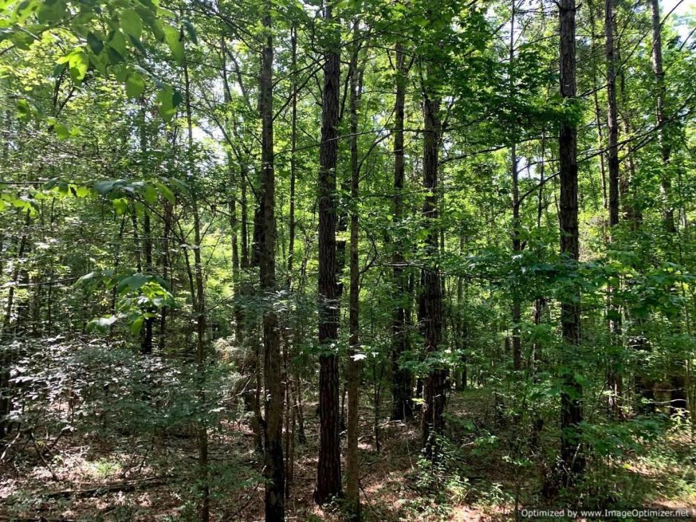Hunting Land with Small Crop Acreage in Attala County, MS