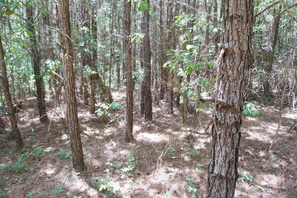 Marion Timber Investment and Hunting Tract in Perry County, AL
