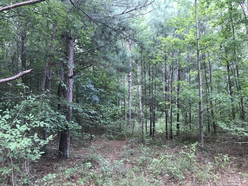 Evergreen Timber Investment and Hunting   in Itawamba County, MS