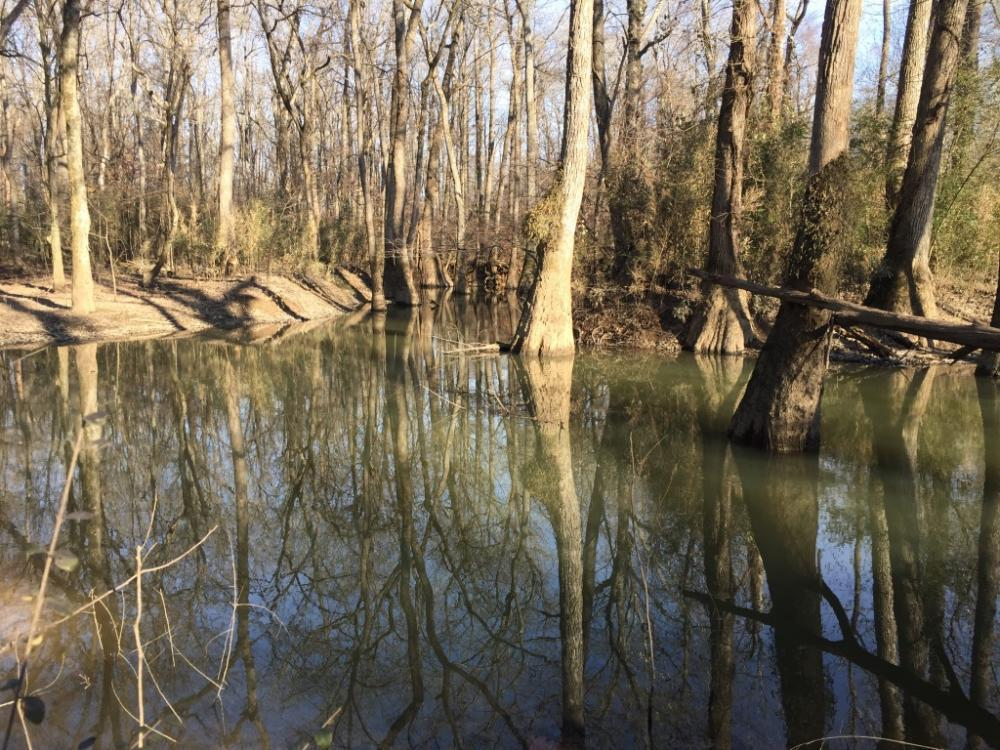 220+/- Acres Thurman Flats & Cane Creek Hunting & Timberland Property in White County, AR