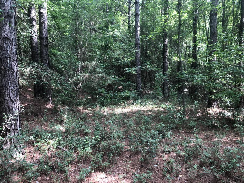 Sylvarena Timber Tract in Smith County, MS