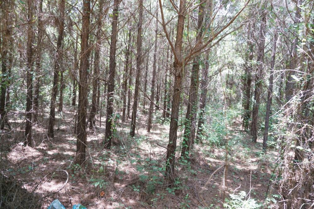 Taylor Creek Timber and Hunting -Tract A in Perry County, AL